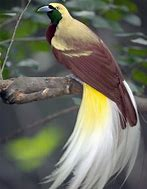 bird-of-paradise-3