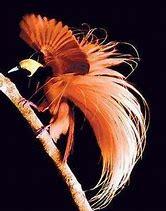 bird-ofparadise-4
